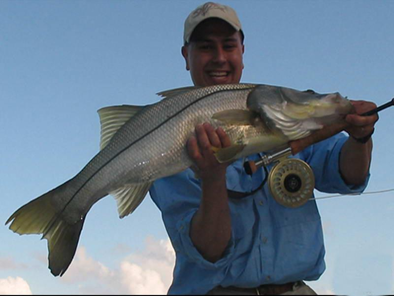 Huge Snook Caught Fly Fishing In Fort Myers